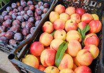 Косточковые фрукты содержат больше глюкозы и меньше фруктозы, а семечковые, наоборот, больше фруктозы и меньше глюкозы