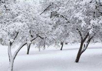 """В большинстве регионов России предстоящей зимой ожидается значительное превышение нормы осадков, сообщаютспециалистыцентра """"Фобос"""""""