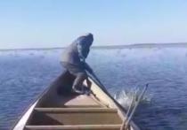 Человек напал на волка в Астраханской области
