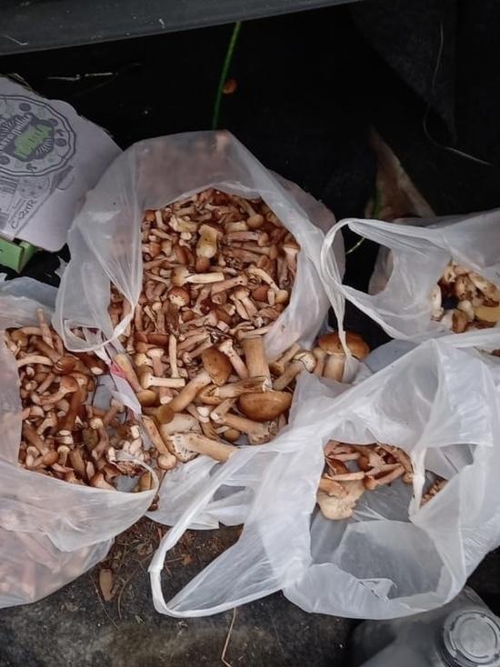 В Тамбове продолжается  опасный «грибной бум»