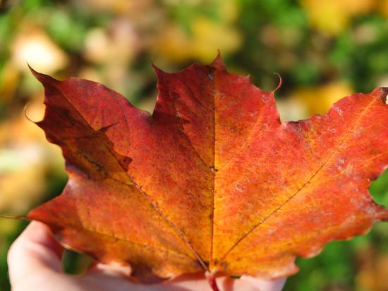 Терапевт Гумалевский назвал способы поддержать организм осенью