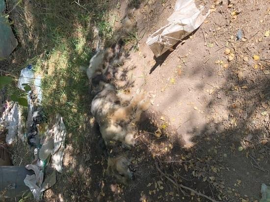 В Бишкеке убили животных и подожгли приют