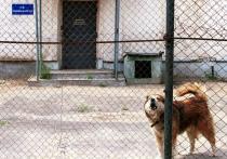 Невольный эффект: почему власть не боится разоблачений тюремного «пыточного конвейера»
