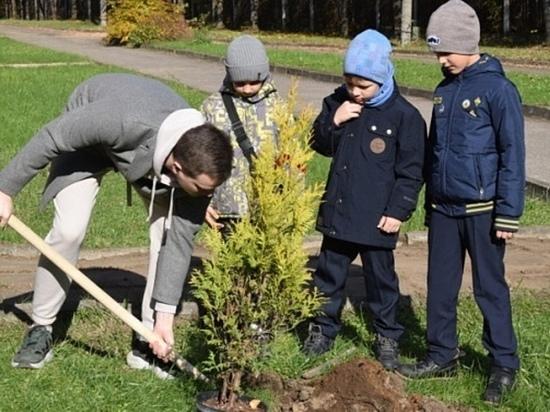 В Иванове дети из интернациональной школы-интерната высадили аллею из золотистых туй