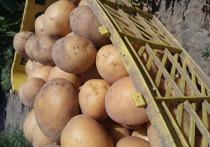 Власти Кабардино-Балкарии: стоимость картофеля повысилась временно