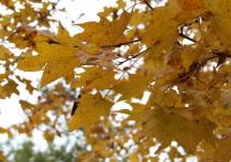 В пятницу, 9 октября, во Владивостоке будет солнечно, но прохладно