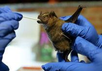 Коронавирус не возник в печально известной пещере Модзян с летучими мышами, где шесть китайских шахтеров в 2012 году были поражены загадочной болезнью, похожей на грипп, утверждает французское исследование