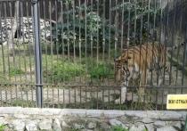 Как сообщил центр «Амурский тигр», путешественники смогли не только заснять на видео молодого котенка, но и увидеть его родителей и еще одного малыша