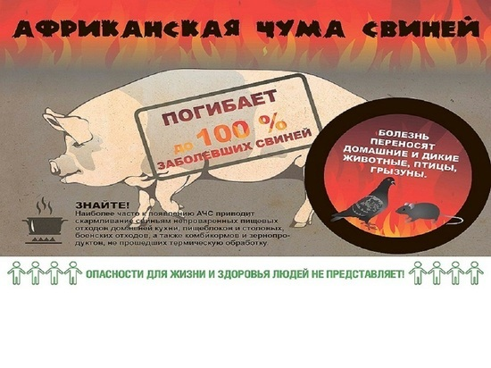 В Калужской области впервые из-за АЧС произошел падеж скота на крупной ферме