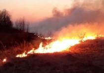 В Курском районе пожарные предотвратили лесной пожар