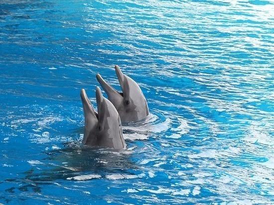 В Грозном открыли новый сезон шоу дельфинов