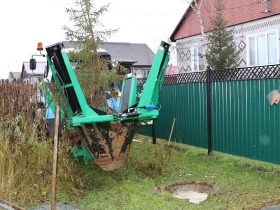 Услуги по пересадке деревьев предложила ямальцам УК в Красноселькупе