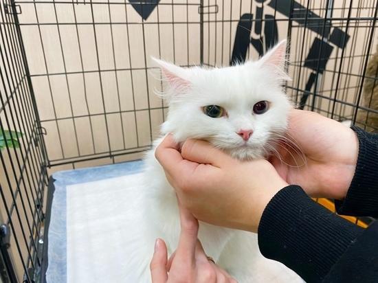 На выставке бездомных животных 7 кошек обрели хозяев в Муравленко
