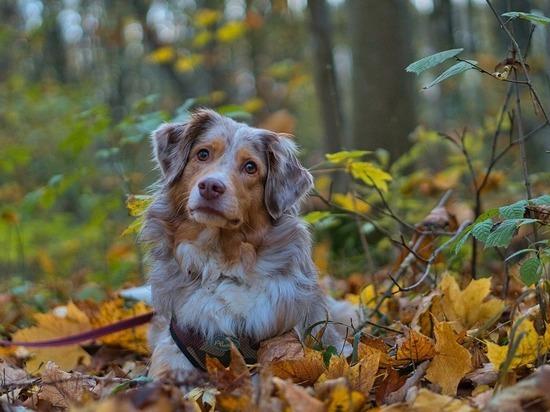 В Белгороде пройдет выставка-раздача бездомных собак