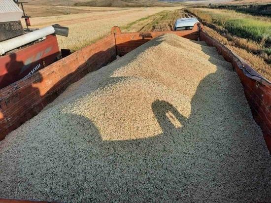 В Туве зафиксирован рост урожайности зерновых культур