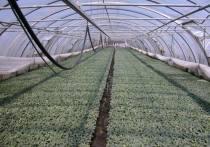 Министр сельского хозяйства РФ Дмитрий Патрушев сообщил, что Подмосковье входит в число лучших регионов России по реализации Федеральной научно-технической программы развития сельского хозяйства на 2017-2025 годы