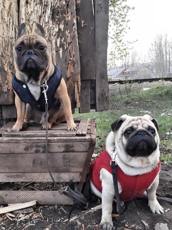 В Тамбове стартовал сезон «собачьих пуховиков»
