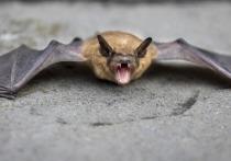 Китай отказывает доступ экспертам ВОЗ к сотням пещер летучих мышей и ферм по разведению диких животных в рамках расследования вспышки COVID-19