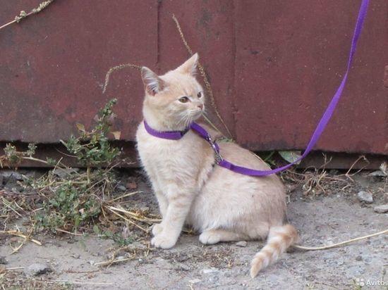 Ивановский стрелок расправляется с домашними кошками