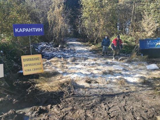 В трех калужских районах и Обнинске введен карантин по чуме свиней