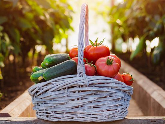 Россельхозбанк: объем рынка органической продукции России к концу 2021 года может составить более 12 млрд руб.