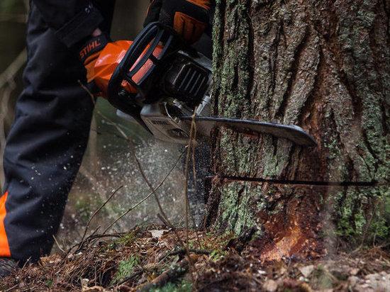 Ивановец нарубил деревьев на 320 тысяч рублей