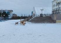 Соцсети: агрессивные чипированные собаки бросаются на детей у школы в Губкинском