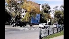 «Вот так коррида»: по Астрахани бегают коровы