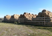 Региональный Минсельхоз сообщает, что на начало октября фермеры уже скосили 395 тысяч гектаров и заготовили 833 тысячи тонн сена