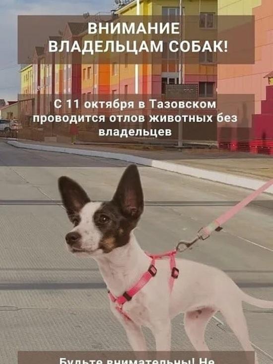 Проводится отлов: не отпускать домашних собак на самовыгул просят жителей Тазовского