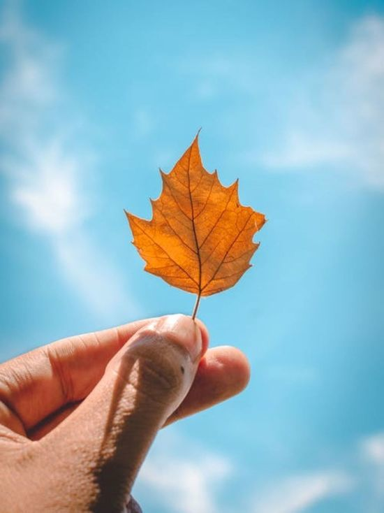 Зима будет холодной: как определить по погоде 13 октября