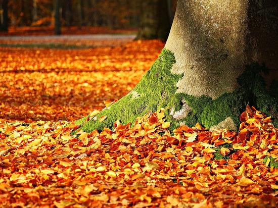 До +15 градусов и солнечная погода ожидаются в среду, 13 октября