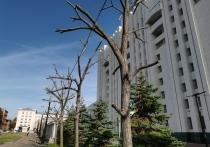 Всем известно, что в преддверии зимы деревья сбрасывают листья