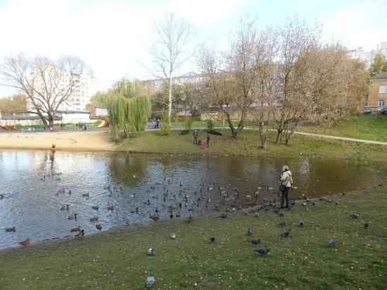 На Пуховском пруду в Калуге насчитали больше 300 крякв