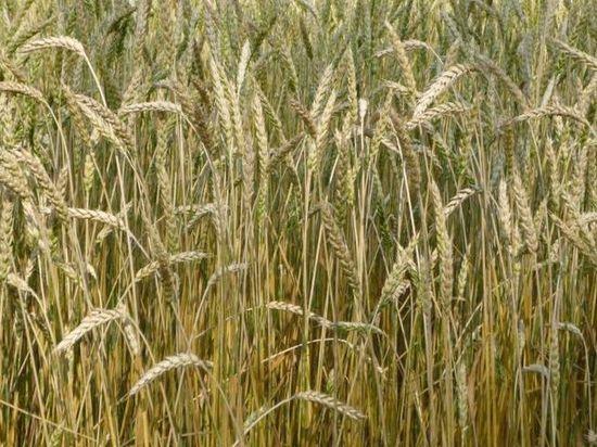 Омский фермер оценил планы властей отдать сельхозземли в аренду Узбекистану