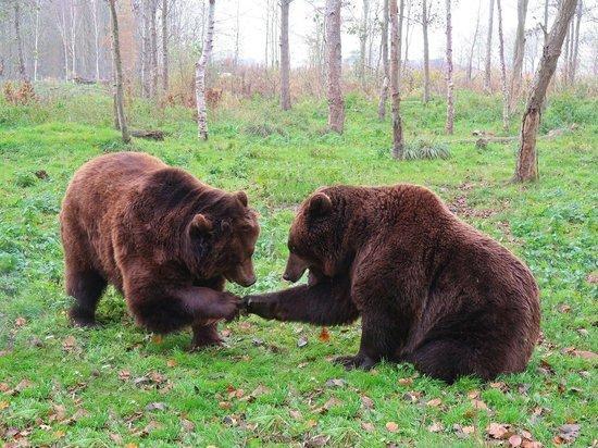 На территории алтайского завода продолжаются поиски медвежонка