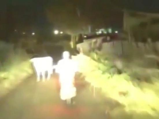 Коровы помогли полиции задержать нарушителя в Иланском районе Красноярского края