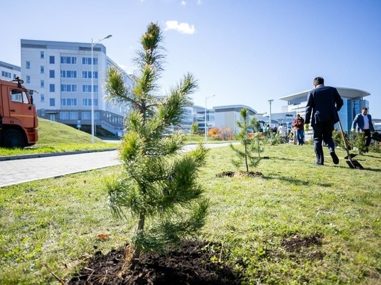 На острове Русский высадили 300 кедров из Кузбасса