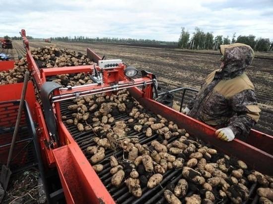 В Притамбовье завершают сбор урожая картофеля