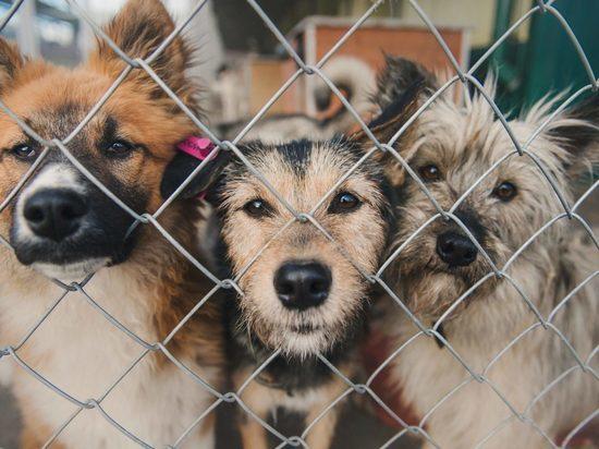 В ивановском приюте для животных отключили холодильники
