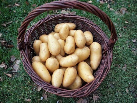 В ДНР добились снижения цены на картофель