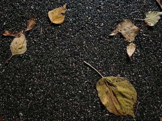 Погода на четверг, 14 октября: воздух прогреется до +9