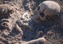 Поисковики обнаружили останки четырех краснофлотцев в Ленобласти