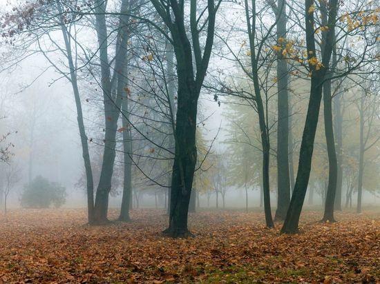 Туман и заморозки ожидают жителей Ленобласти в четверг