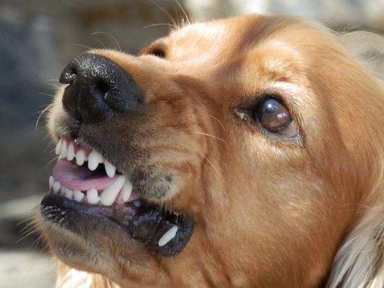 Власти Магадана пытались оспорить штраф за покусанную собакой девочку