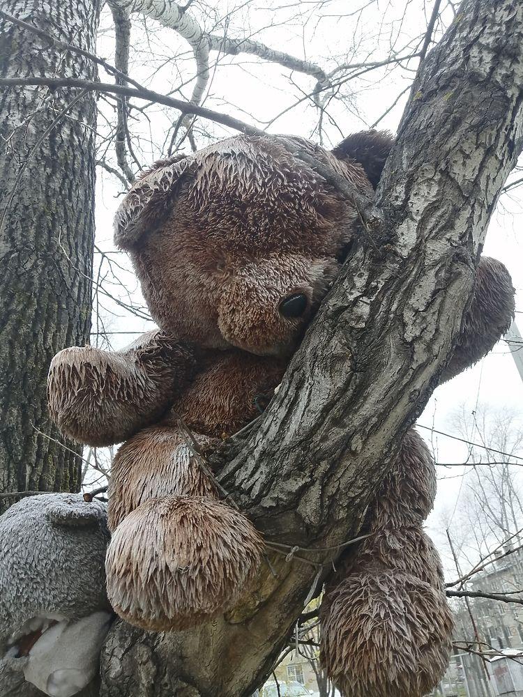 Жуткое кладбище детских игрушек нашли в Хабаровске