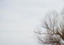 В Астрахани в селе Солянка на два месяца ввели карантин по бешенству