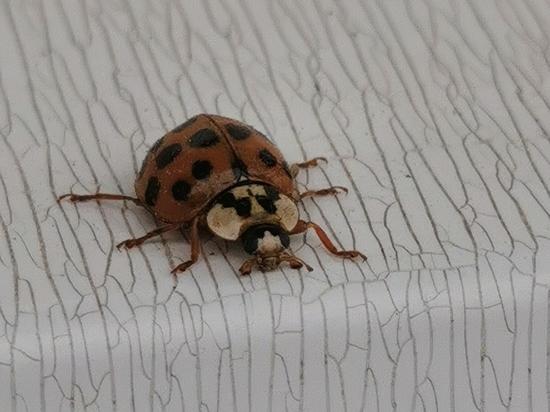 Зачем насекомые пытаются захватить наши дома?
