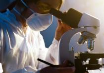 Продукты, способные продлить жизнь, назвали учёные