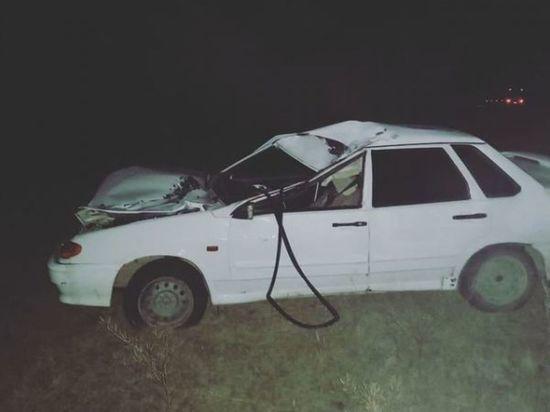 Автомобилист из Башкирии погиб при столкновении с лошадью